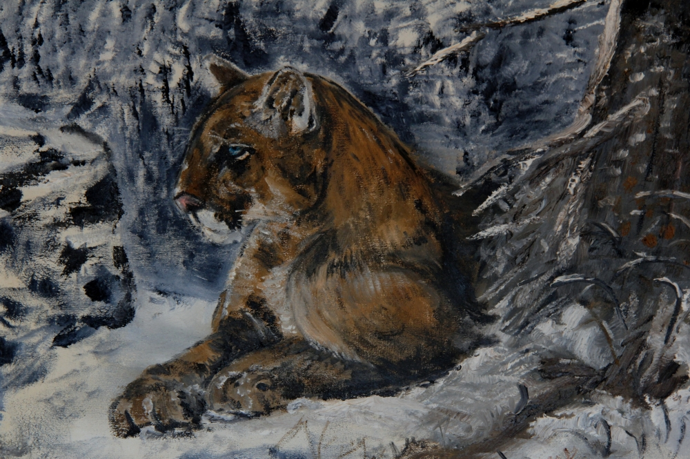 cougar cropped